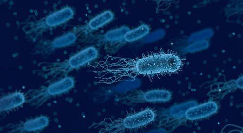بكتيريا الوجه